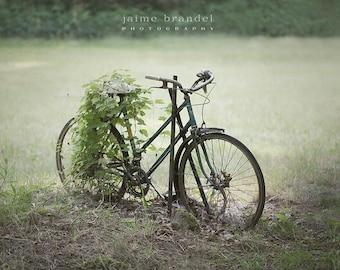 Photography print: bike, old bike, bike covered in ivy, rusty bike, bicycle, fine art print