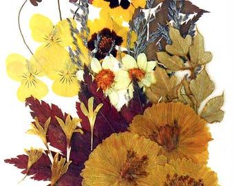 Pressed flowers yellow pansy multicule garden tickseed cosmos cornflower maple foliage