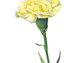 Carnation watercolor painting, carnation print, 5 by 7 size, flower watercolor painting, January Birth Flower print, botanical art, C11516