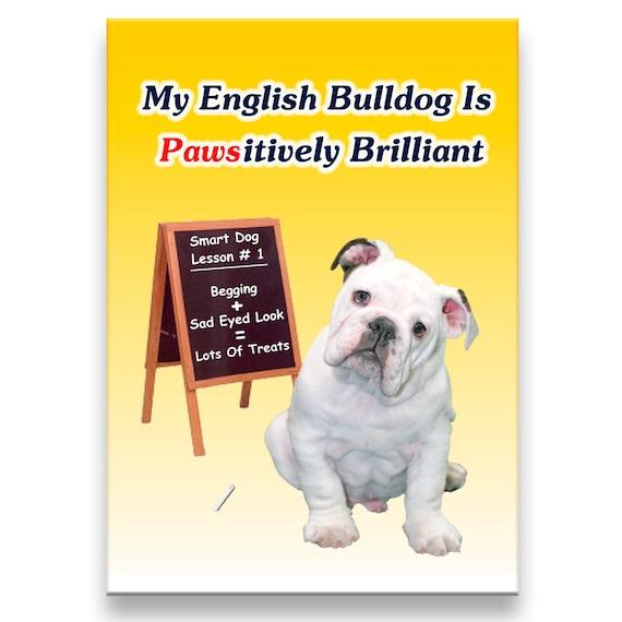 English Bulldog Pawsitively Brilliant Fridge Magnet No 3