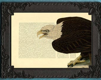Bald eagle, sea eagle print, eagle art print