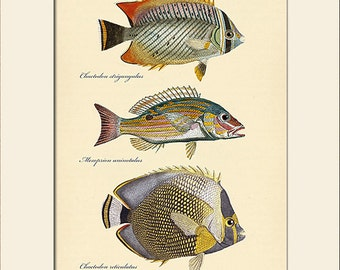 Vintage Fish Print #101, Art Print with Mat, Note Card, Natural History, Beach House Wall Art, Nautical Art, Sea Life Prints, Wall Decor