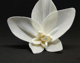 Sola Wood Orchid Flower