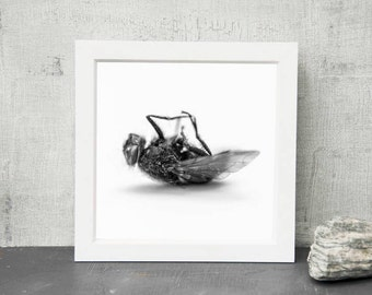 Fly, giclee print, photography, wall decor, fathers day, patterns, fine art, art, black and white, nature