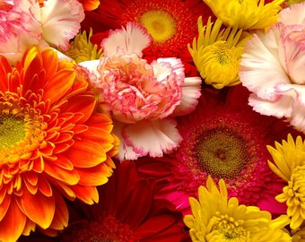 Flowers Daisies Carnations Bouquet Orange Pink White Red Photograph Print