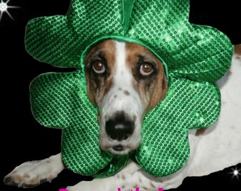 St Patricks Day Shamrock hat for dogs and cats