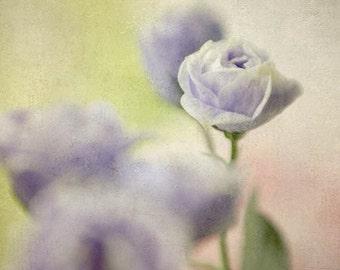 Blue Flower Photo,  Floral Art Print,  Flower Photography, Shabby Chic Wall Decor, Nursery Decor, Bedroom Decor