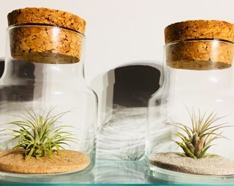 Tillandsia (Air Plant) in Jar with Cork