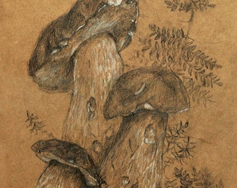 Mushrooms and fern from the forest. Pencil and pastel. Original. Handmade