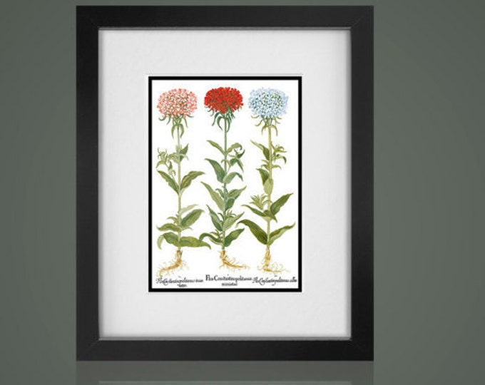 BOTANICAL PRINT - Matted And Framed botanical Print- Free Shipping - Gallery Wall Art, Framed Antique Print, Black Or  White Frames