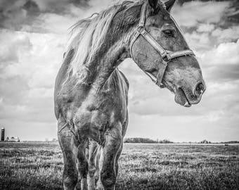 Fine Art Print  //  Amish Horse  // HDR // Photography