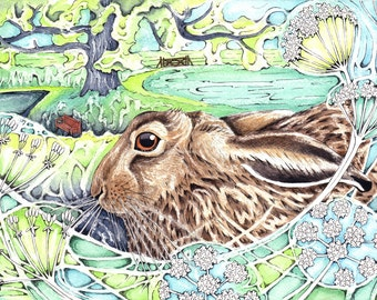 Brown Hare in Dell Garden