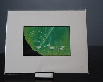 4 x 6 Green Leaf Photo Matted to 8 x 10