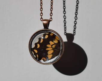 Real Butterfly Wing Necklace Pendant Glass Cabachon