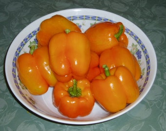 Sweet Pepper Plant, Sunrise Orange Bell Organic