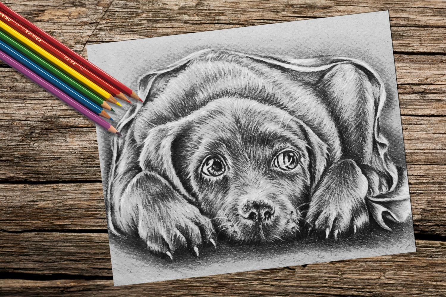 Coloring Pages To Print Of Dogs : Pointer animal coloring pages staruptalent