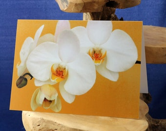 White Orchids-a blank greetings card suitable for birthday and any celebration from our original photograph