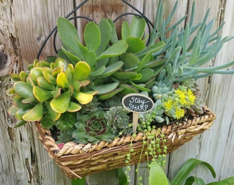 Succulent Tags - Plant Markers - Plant Stake - Succulent Decor - Succulent Stakes - Home Decor Plant Tags - Gardening Gift - Graduation Gift