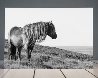 My Favourite Daydream - Horse Photography (Equine Fine Art Print)