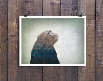 Chimpanzee Double Exposure - Photo Fine Art Print - Multiple Sizes