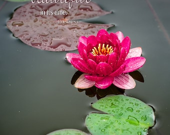 Scripture Wall Art // Canvas Gallery Wrap // Water Lily Photograph // Ecclesiastes 3:11