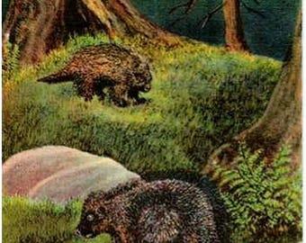 Vintage Alaska Postcard - Porcupines in the Forest (Unused)