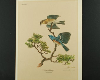 Vintage Ray Harm Lazuli Bunting (Passerina amoena) Pencil Signed Offset Lithograph