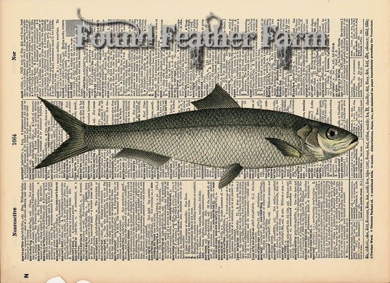 """Vintage Antique Dictionary Page with Antique Print """"Ocean Fish Two"""""""