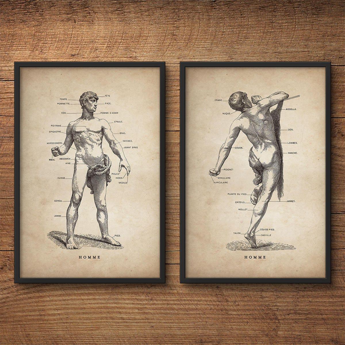 Anatomy poster set of 2 Anatomy art decor Human anatomy
