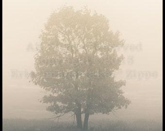 Tree Photography, Ethereal Tree, Oak Tree in Big Meadows Shenandoah National Park Virginia, Beige Mist Wall Art, Fine Art Photograph Print