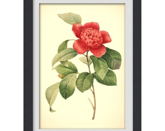 Botanical Print, Redoute art, Floral Printable red flower, 8x11 botanical art print from a vintage book plate. #INSTANT DOWNLOAD 45