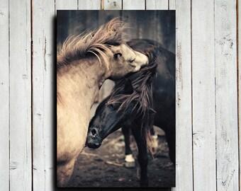 Grooming Ponies - Horse art - Animal photography - Horse decor - Ponies art - Ponies decor - Country Western decor
