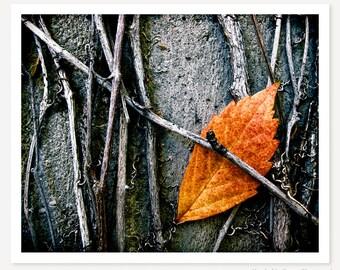 Caught - Autumn Leaf Photo - Minimalist Photograph - Nature Photography - Fall Leaves Art Print - Orange Grey Gray Black