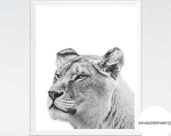 Lioness Print, Nursery Wall Art, Animal Photography, African Print, Black and White, Lion Poster, Digital Download, Lion Decor, Lion Print