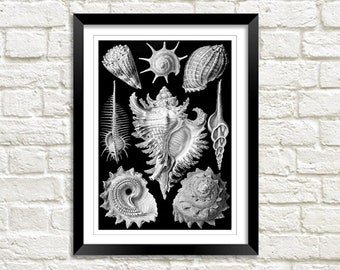 SHELLS PRINT: Vintage Seaside Art Wall Hanging