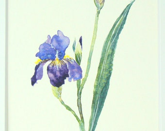 Purple and Yellow Iris Watercolor Painting, Mother's Day, Gift for Her, Birthday, Anniversary, Impressionist Art, Wildflower, Elegant Flower