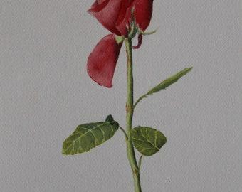 Until the Last Petal Falls, Original Watercolor Painting, Flower Painting