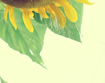 Sunflower fine art photography digital download.
