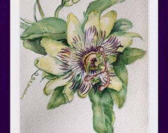 Passion Flower, Watercolor