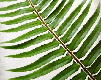 Fern leaf botanical print - green wall art - nature home decor - modern rustic living room art  - Sword Fern