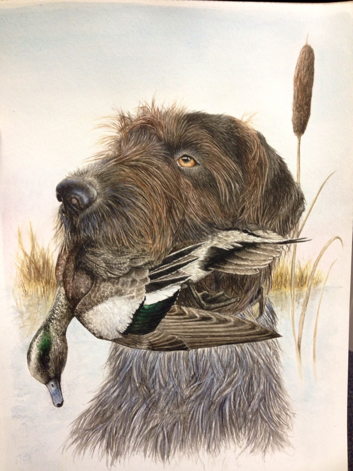 Drahthaar dog painting: drahthaar watercolor print duck