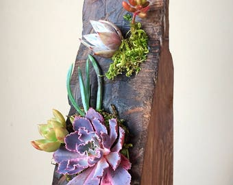 Succulent art/plant art/succulents/succulent planter/succulent arrangement/reclaimed wood/rustic decor/burnt wood/wood art/planter/air plant