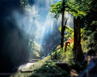 Redwood Forest Landscape Photograph - Mist and Redwoods with Sunbeams Photograph, British Columbia, Canada - Misty Redwood Tree Art Print