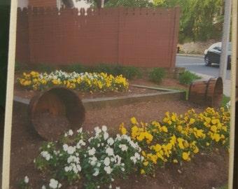 Flowers (White and Yellow) Mini Photo Display