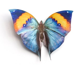 Blue Butterfly - Moth of the Month - April