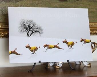 Basenji Winter Run Art
