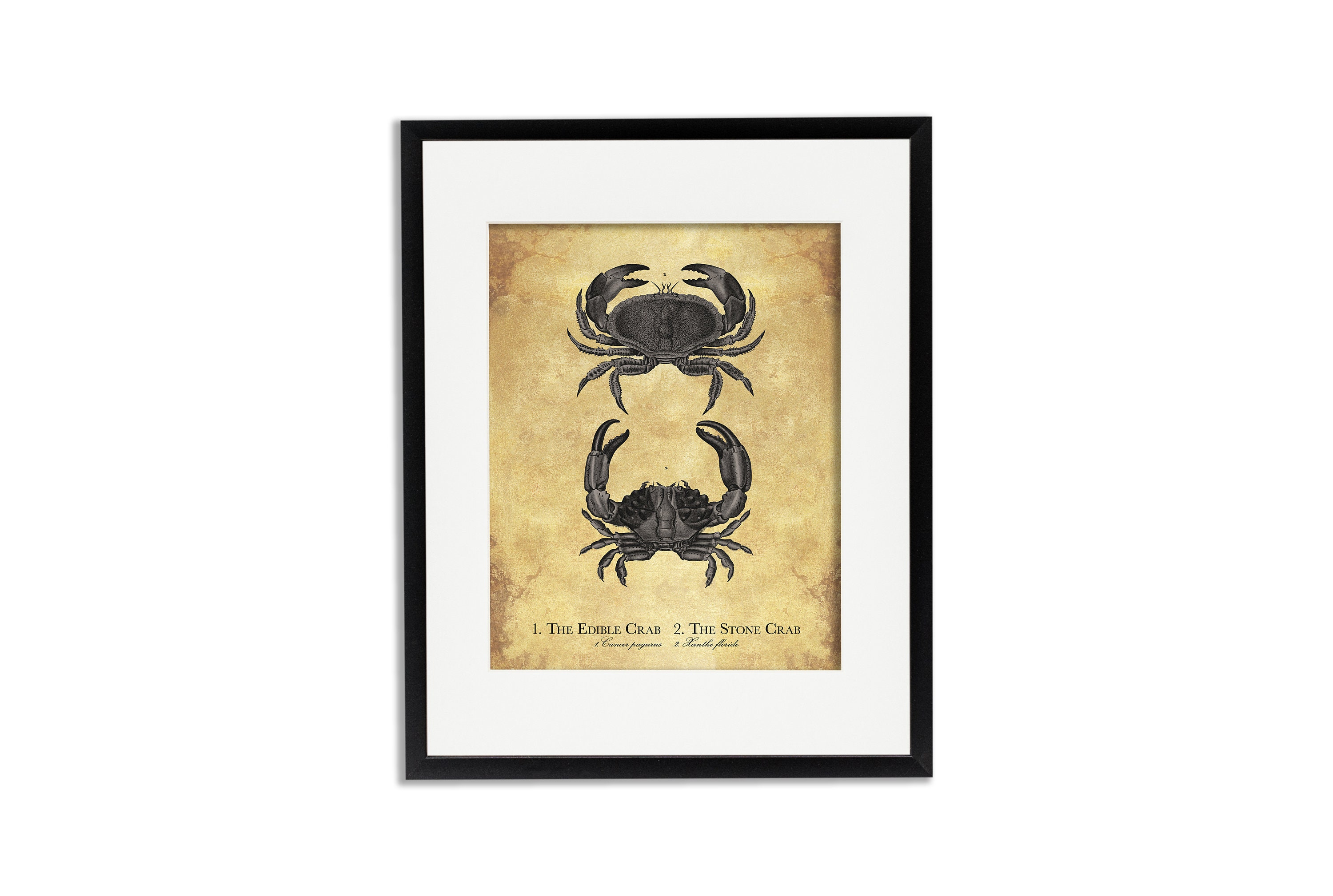 Crab Print Coastal Wall Art Vintage Beach Decor Crab