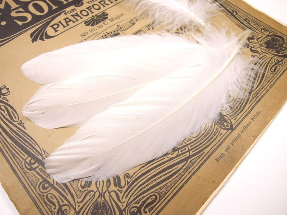 20 White feathers - White quills - Feathers for crafts - Loose wholesale feathers - Natural feathers - Wedding decor feathers. UK