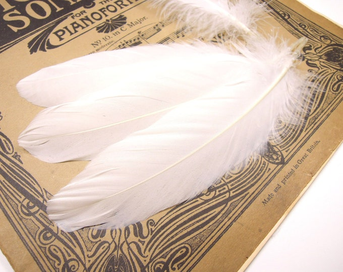 20 White feathers, White quills, Feathers for crafts, Loose wholesale feathers, Natural feathers, Wedding decor feathers