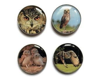 Owl magnets or owl pins, owl buttons, bird magnets pins, refrigerator magnets, fridge magnets, office magnets